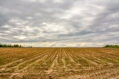 Campo agricolo coltivare con le patate Formato dal techniq Immagini Stock
