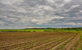Campo agricolo coltivare con le patate Formato dal techniq Immagine Stock