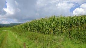 Campo agricolo con cereale Fotografia Stock Libera da Diritti