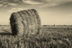 Campo agricolo con le balle della paglia Fotografia Stock Libera da Diritti