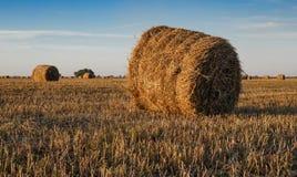 Campo agricolo con le balle della paglia Immagine Stock