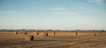 Campo agricolo con le balle della paglia Immagini Stock