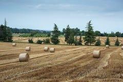 Campo agricolo con le balle della paglia dopo il raccolto Fotografia Stock Libera da Diritti