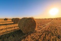Campo agricolo dopo la raccolta del grano Rolls di fieno ha allineato nella fila sui precedenti di cielo blu e del tramonto Fotografia Stock Libera da Diritti