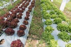 campo agricolo fertile per la piantatura del raccolto organico nella lan dell'azienda agricola Immagine Stock Libera da Diritti