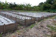 campo agricolo fertile per la piantatura del raccolto organico nella lan dell'azienda agricola Immagini Stock Libere da Diritti