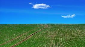 Campo agricolo verde con cielo blu e le nuvole su fondo fotografia stock