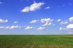 Campo agricolo verde della scrofa Fotografia Stock