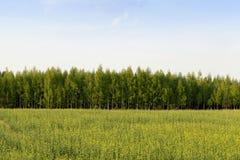 Campo agricultural fotografia de stock