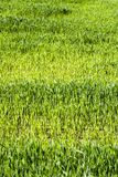 Campo agricultural foto de stock