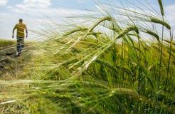 Campo agricultural Imagem de Stock
