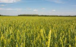 Campo agricultural Imagem de Stock Royalty Free