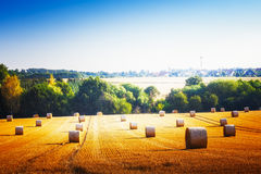 Campo agricultural Foto de Stock Royalty Free