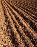 Campo agricultural Imagens de Stock