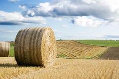 Campo agricultural Fotos de Stock