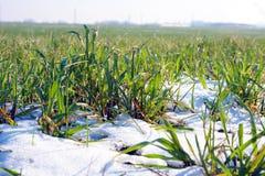 Campo agricultural coberto pela neve Imagens de Stock Royalty Free