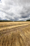 Campo agricultural flax fotos de stock royalty free