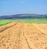 Campo agricultural nas montanhas Imagem de Stock Royalty Free