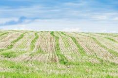 Campo agricultural stubble foto de stock