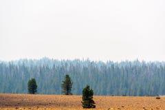 Campo ahumado de Brown de los árboles imágenes de archivo libres de regalías