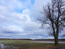 Campo, albero e bello cielo nuvoloso, Lituania Immagine Stock
