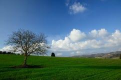 Campo, albero e cielo blu Immagine Stock