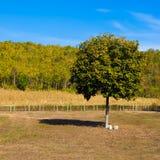Campo, albero, montagna Fotografia Stock