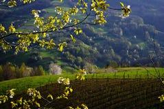 Campo alle colline Immagini Stock