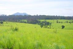 Campo alpino Imagem de Stock