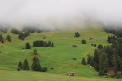 Campo alpino Fotografia de Stock