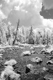 Campo alpino infravermelho na floresta Fotografia de Stock Royalty Free
