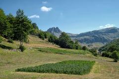 Campo alrededor de las montañas de Moraca, Montenegro foto de archivo libre de regalías