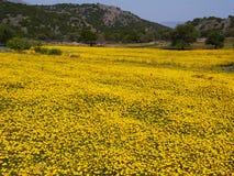 Campo amarelo Foto de Stock