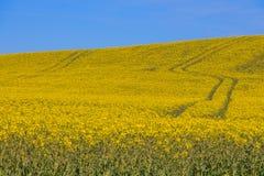 Campo amarelo Fotos de Stock