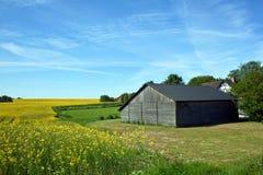 Campo amarelo com um celeiro Fotos de Stock Royalty Free