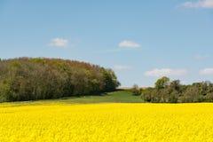 Campo amarelo cultivado das batidas em França fotos de stock royalty free