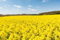 Campo amarelo cultivado das batidas em França fotografia de stock