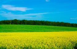 Campo amarelo de Allee Fotos de Stock