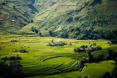 Campo amarelo do arroz em montanhas da MU Cang Chai, Vietname Fotos de Stock Royalty Free