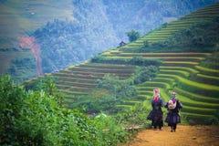 Campo amarelo do arroz em montanhas da MU Cang Chai, Vietname Foto de Stock Royalty Free