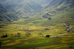 Campo amarelo do arroz em MU Cang Chai, Vietname Imagem de Stock Royalty Free