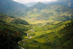 Campo amarelo do arroz em MU Cang Chai, Vietname Foto de Stock
