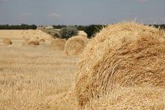 Campo amarelo do trigo com rolos do trigo Imagem de Stock Royalty Free