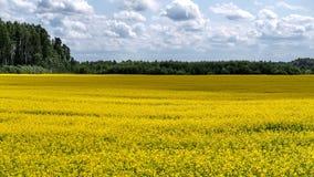 Campo amarelo e céu cludy Imagens de Stock Royalty Free