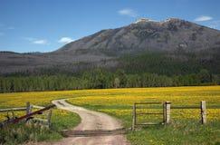 Campo amarelo Montana da cerca da estrada de exploração agrícola da flor Fotografia de Stock Royalty Free