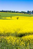 campo amarelo perto de Sobotka, paisagem boêmia da violação do paraíso, república checa foto de stock royalty free