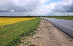 Campo amarelo semeado com violação Fotos de Stock