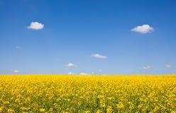 Campo amarelo, Surrey, 2010 Imagem de Stock