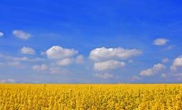 Campo amarillo foto de archivo