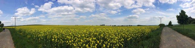 Campo amarillo Imagen de archivo